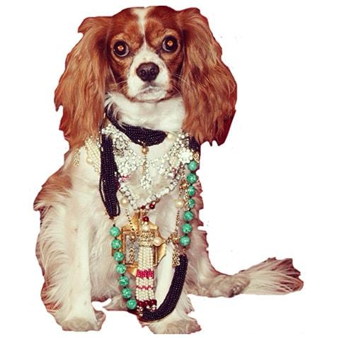 Lola Dog